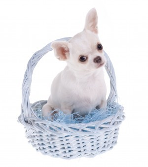 Doggie in basket